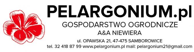 apelargonium1