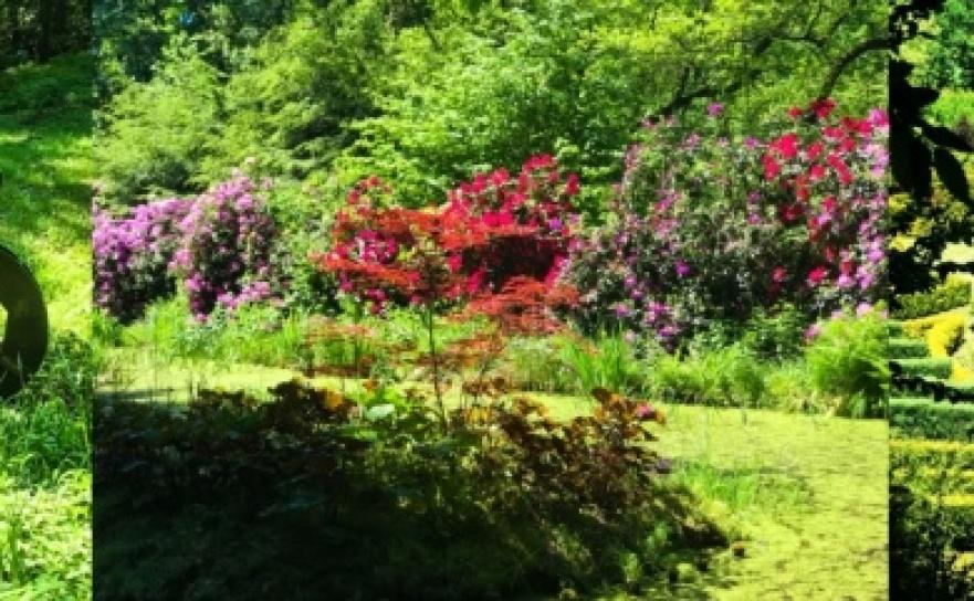 W lesie Obora wszystko pięknie kwitnie