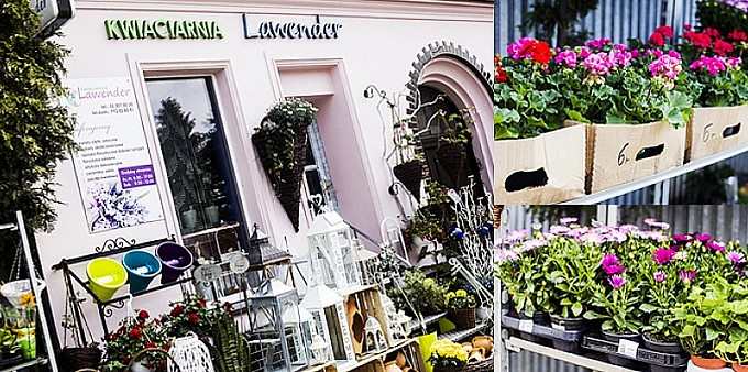 Wiosna z kwiaciarnią Lawender