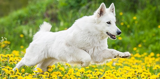 Pies to nie człowiek na czterech łapach